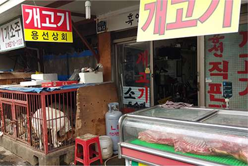 Dog meat on display in Seoul's Moran Market district.